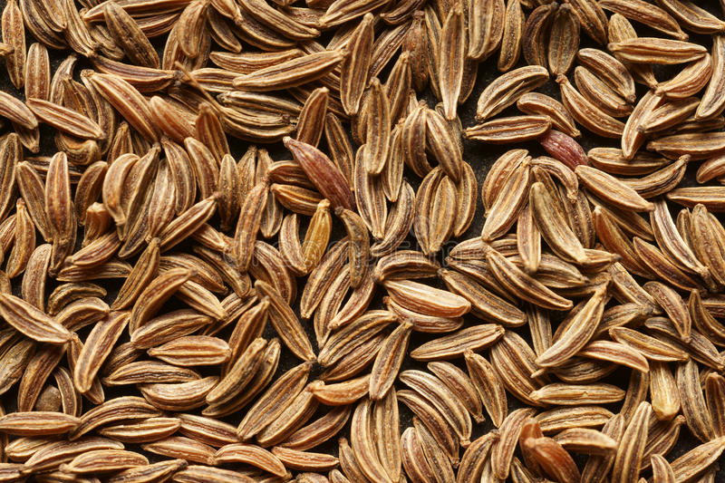 The cumin seeds. royalty free stock photography