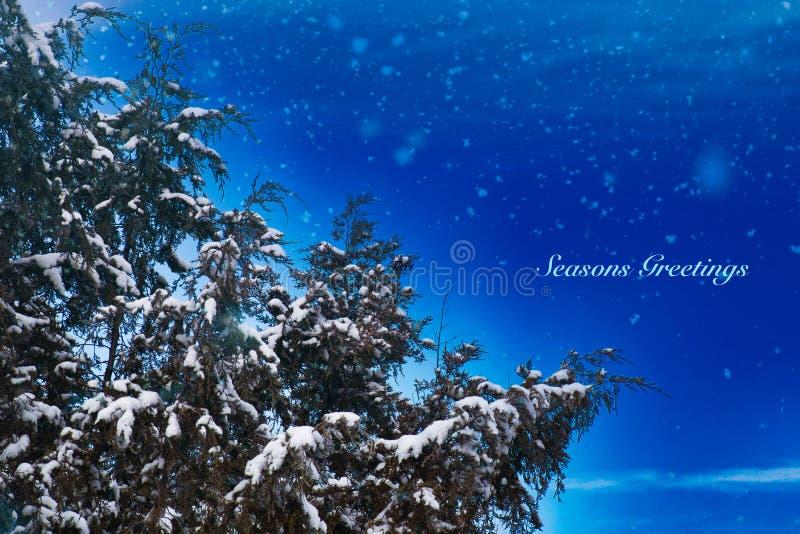Cumprimentos nevados das estações do zimbro fotografia de stock royalty free