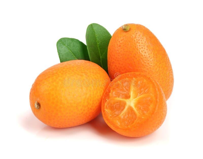 Cumquat ou kumquat com a folha isolada no fim branco do fundo acima foto de stock