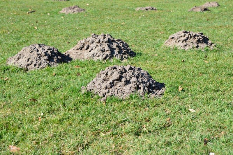 Cumulo di terra sollevato dalla talpa sul campo nel tempo di primavera fotografia stock libera da diritti