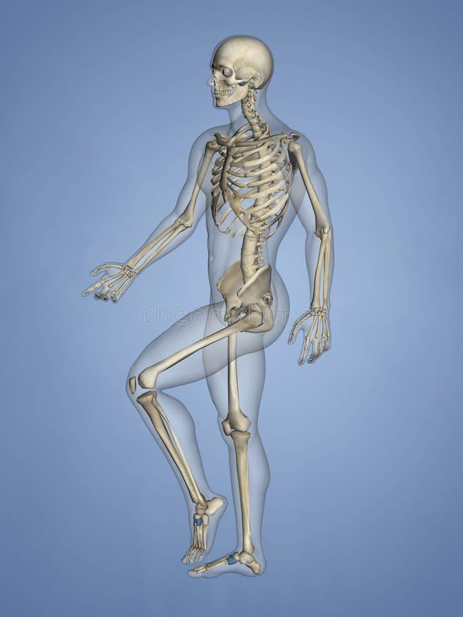 Cuneiform Bones, 3D Model stock photo