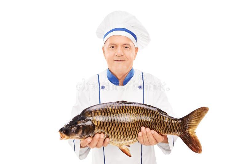Cuoco unico maturo che tiene un pesce crudo fotografie stock libere da diritti