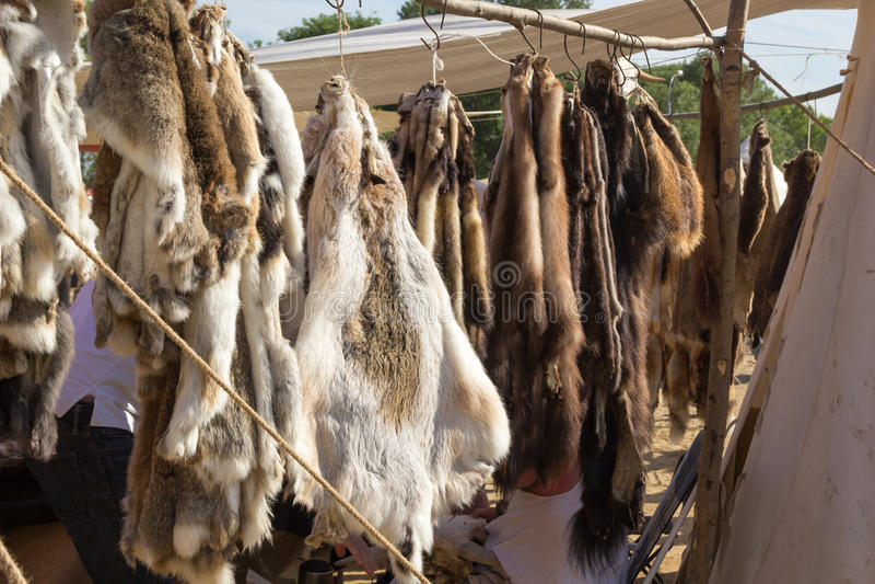Cuoii di caduta degli animali da pelliccia sulla corda immagine stock libera da diritti
