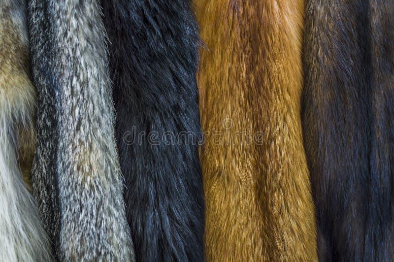 Cuoii simili a pelliccia appesi per esposizione immagine stock libera da diritti