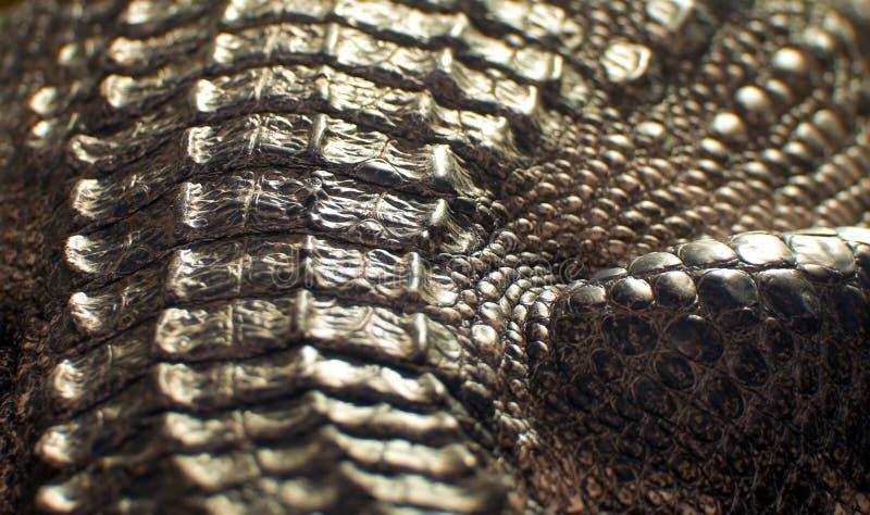 Cuoio del coccodrillo fotografia stock