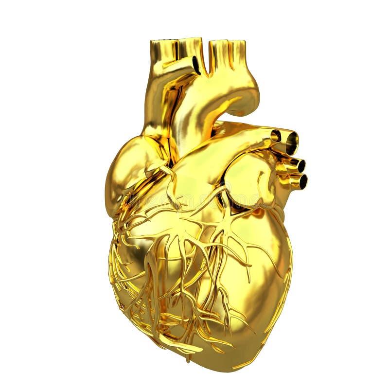 Cuore anatomico dorato illustrazione di stock