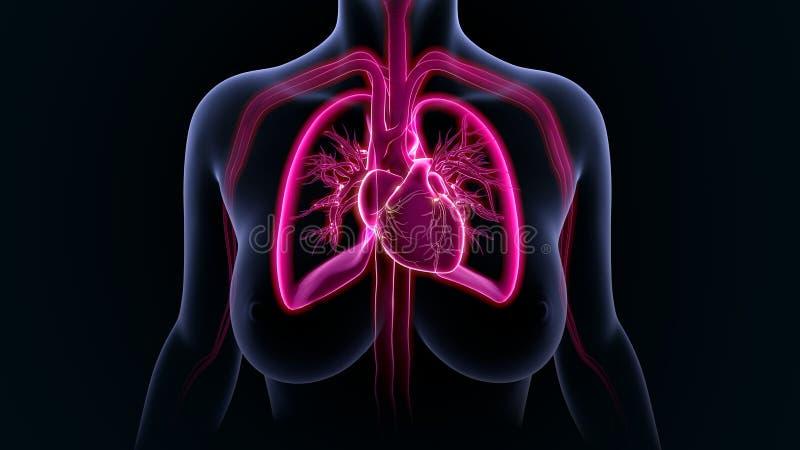 Cuore con i polmoni royalty illustrazione gratis