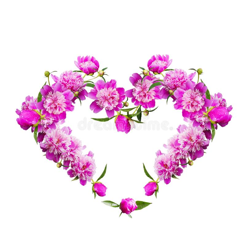Cuore decorativo isolato su bianco delle peonie di fioritura immagini stock libere da diritti