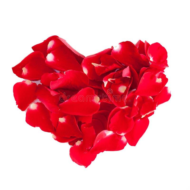 Cuore dei petali di rosa rossa isolati su fondo bianco immagini stock libere da diritti