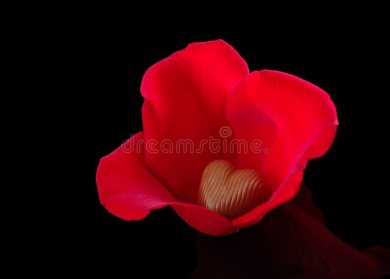 Cuore del cioccolato in petali di Rosa fotografia stock libera da diritti