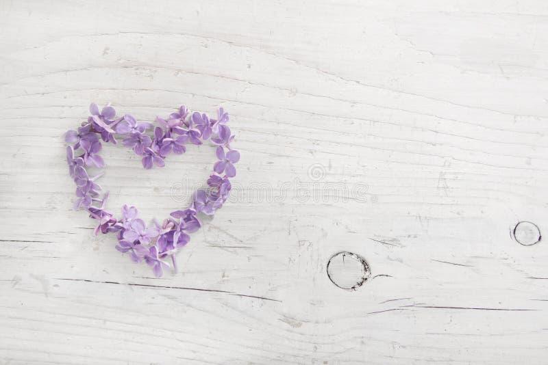 Cuore del fiore lilla viola o blu su di legno misero bianco fotografia stock