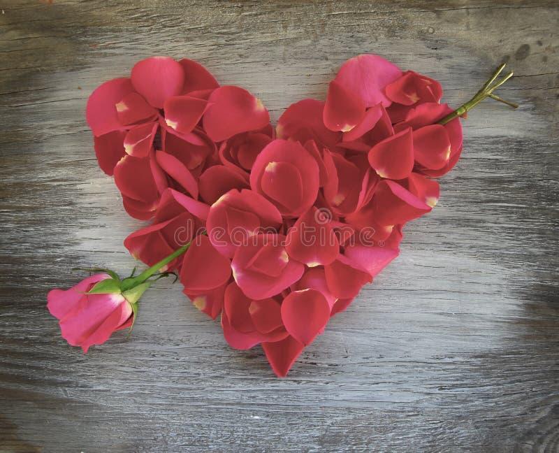 Cuore del petalo di Rosa su vecchia priorità bassa di legno fotografia stock libera da diritti