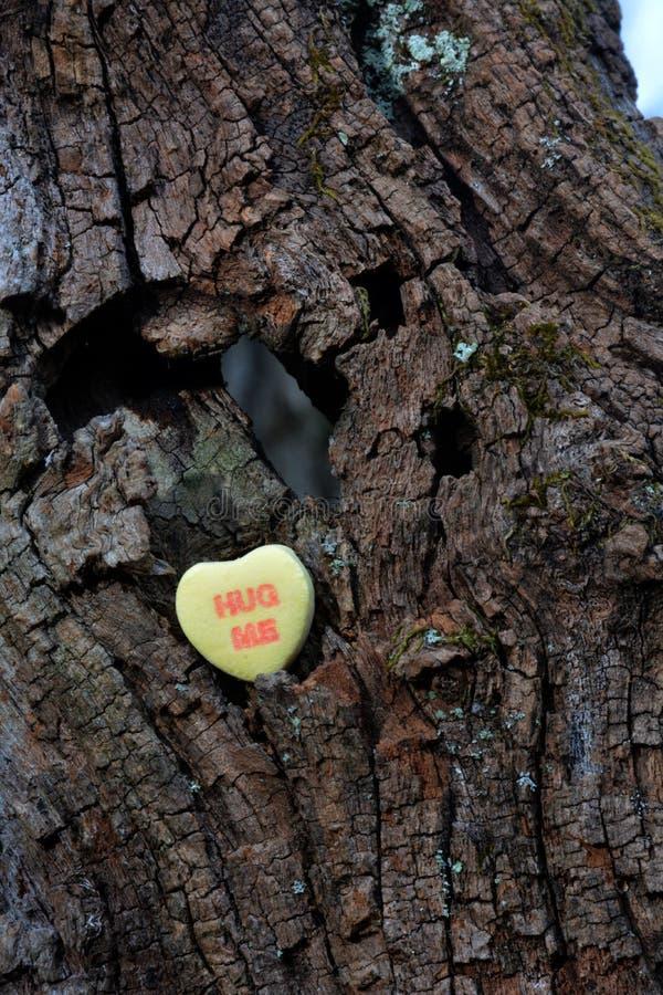 Cuore del ` s del biglietto di S. Valentino nella foresta immagini stock