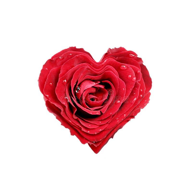 Cuore della Rosa immagini stock libere da diritti