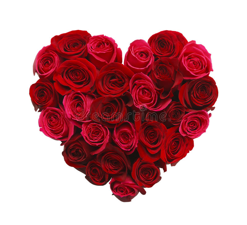 Cuore delle rose immagine stock libera da diritti