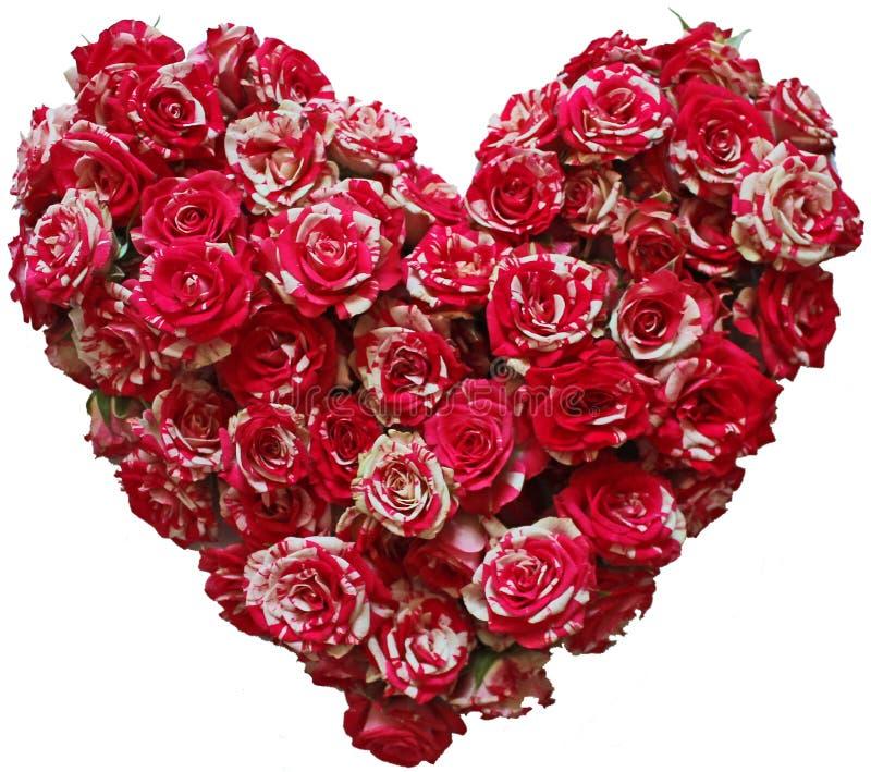 Cuore di piccole rose isolate fotografia stock libera da diritti