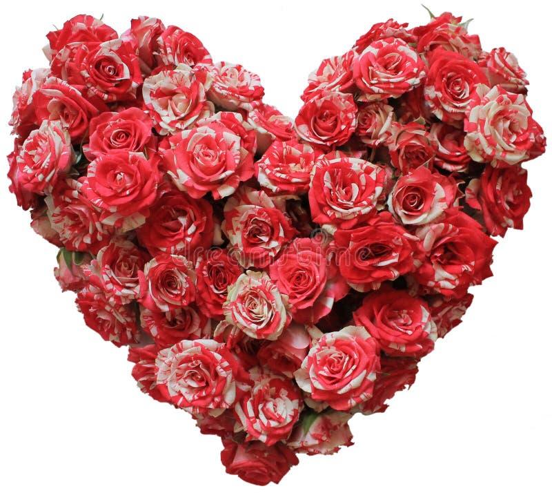 Cuore di piccole rose isolate immagine stock