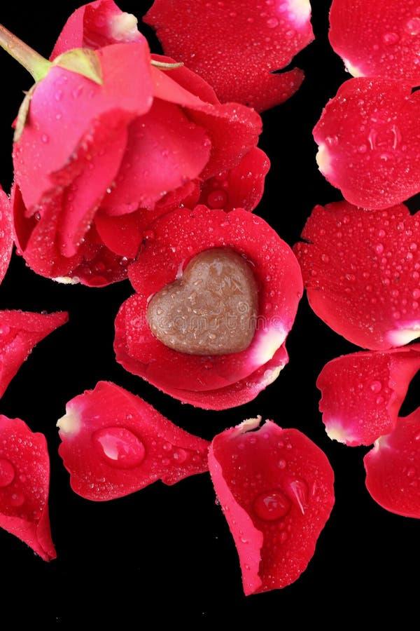 Cuore e rosa rossa del cioccolato immagine stock