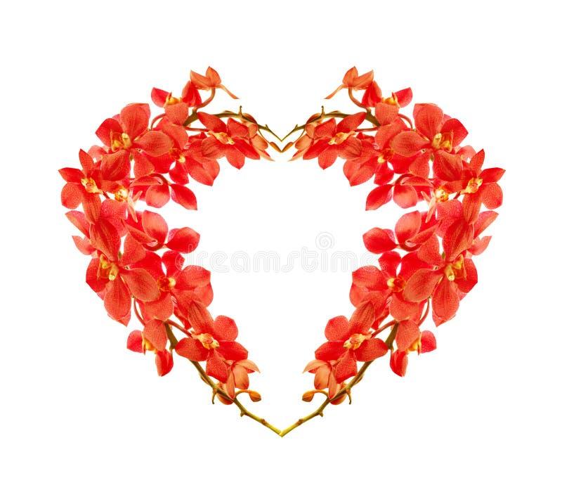 Cuore rosso dell'orchidea fotografia stock