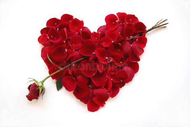 Cuore rosso di giorno dei biglietti di S. Valentino con la freccia della Rosa fotografia stock libera da diritti