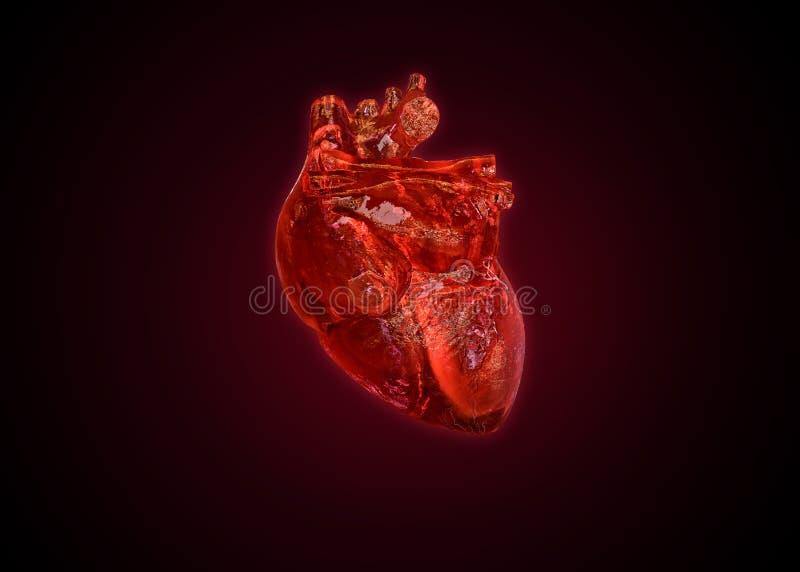 Cuore umano anatomico isolato illustrazione di stock
