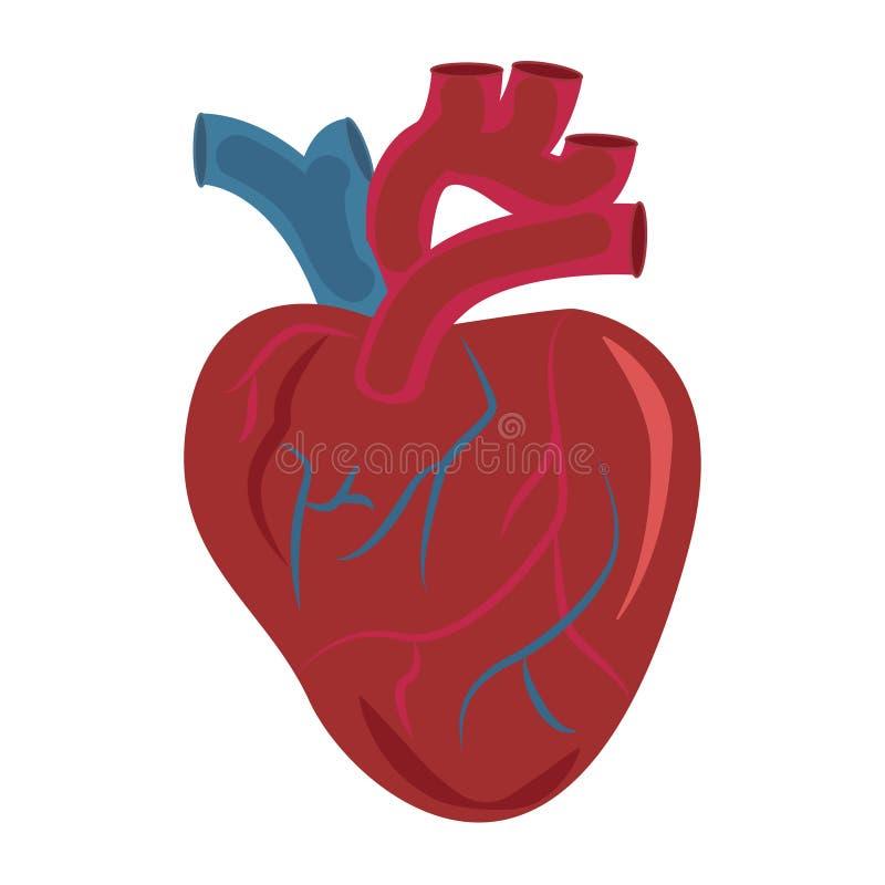 Cuore umano Vettore medico dell'icona di progettazione dell'organo illustrazione di stock