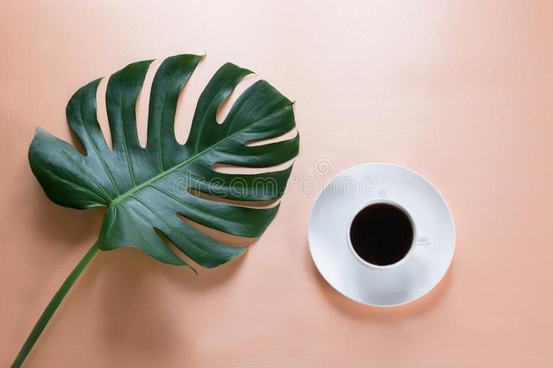 Cup of coffee and green big leaf Monstera plant on pink background. Concept and top view. stock image