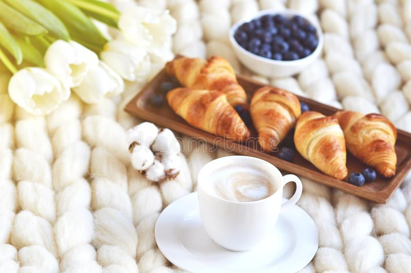 Cup with cappuccino and croissants, berries, white pastel giant knit blanket. Bedroom, flowers tulips, spring, woman day, morning concept royalty free stock images