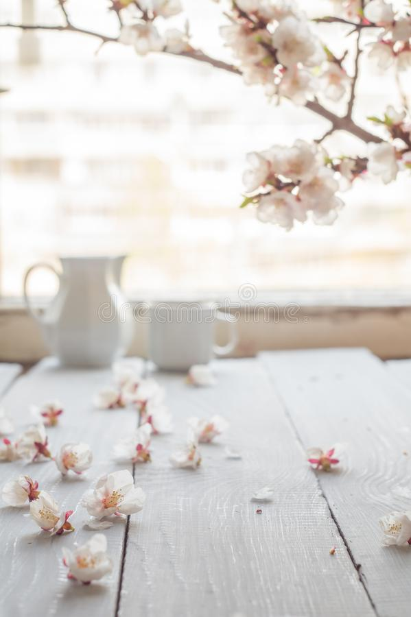 Cup of coffee, milk and apricot blossoming branch on white wooden table stock photo