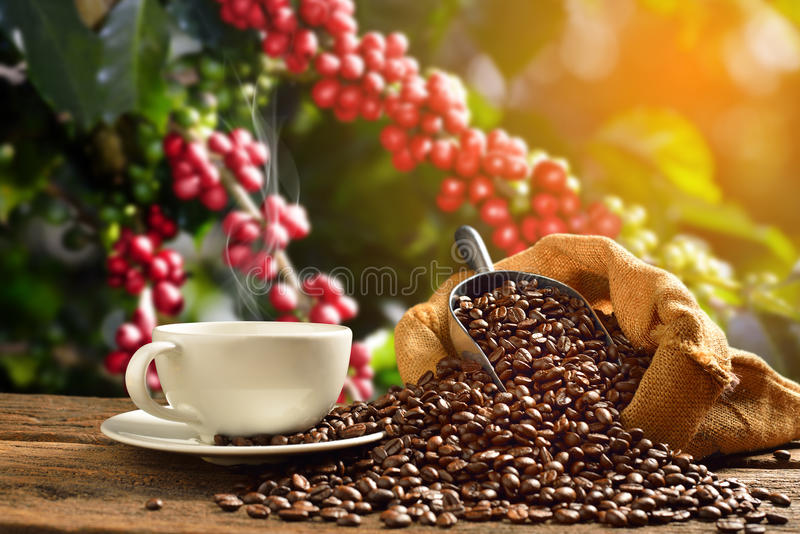 Cup of coffee with smoke and coffee beans in burlap sack on coffee tree background royalty free stock photo
