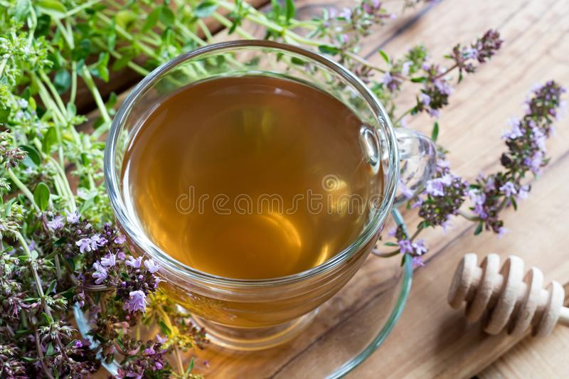 A cup of creeping thyme thymus serpyllum tea. With fresh creeping thyme twigs on a wooden background royalty free stock image