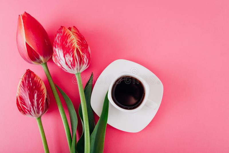 Cup of esspresso coffee and fresh tulips on pink background. Good morning. Inspiration for a new day royalty free stock photos