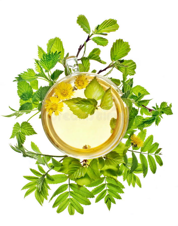 Download Cup of herbal tea stock photo. Image of bright, nettle - 19421412