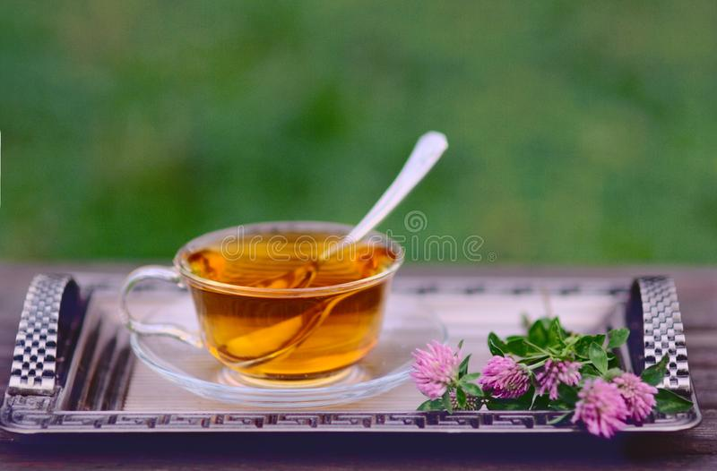 Cup of Herbal Tea with flowers of pink clover royalty free stock image