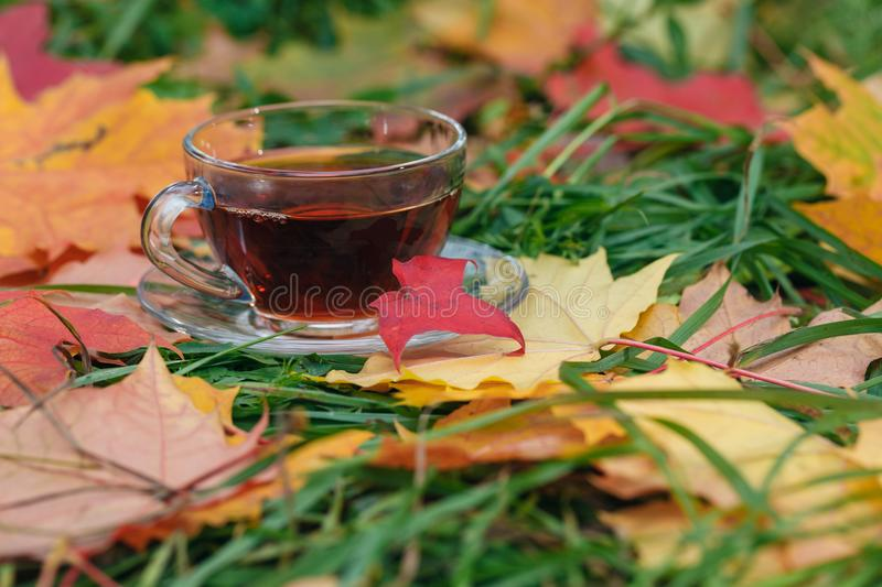 Cup of hot aromatic herbal tea on foliage in park royalty free stock photos
