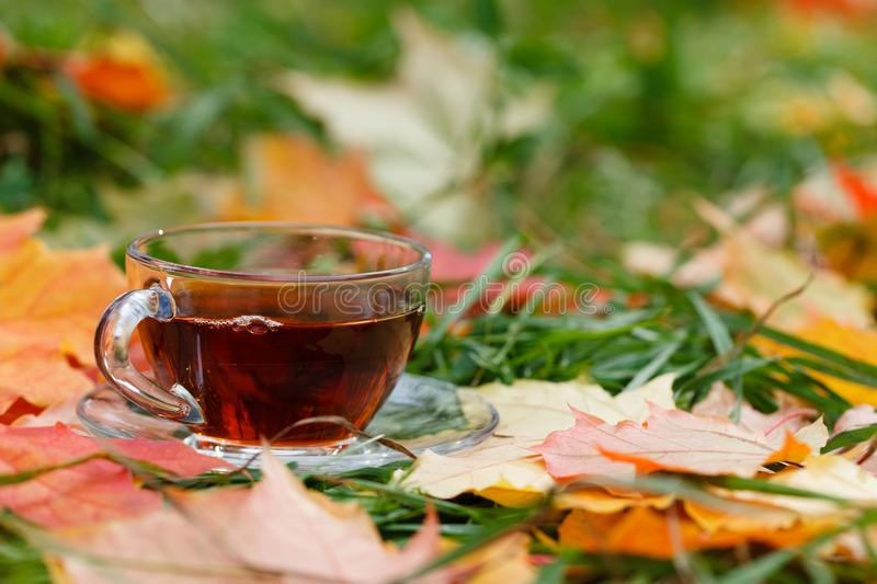 Cup of hot aromatic herbal tea on foliage in park royalty free stock images