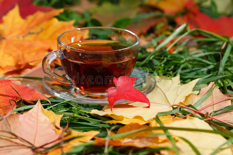 Cup of hot aromatic herbal tea on foliage in park royalty free stock photo