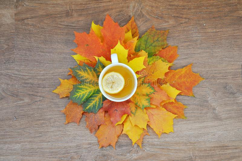 Cup of tea with lemon with autumn leaves stock images