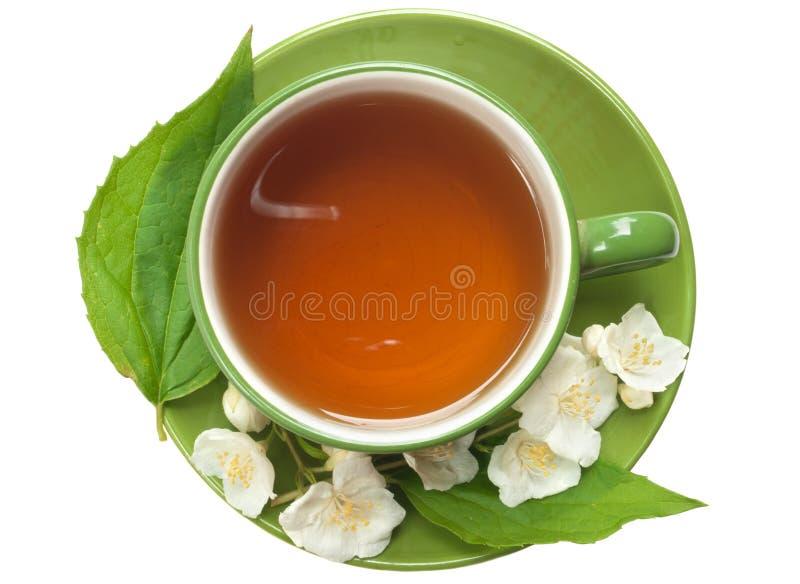 Cup of jasmin tea. Green cup of jasmin tea isolated on white stock photography