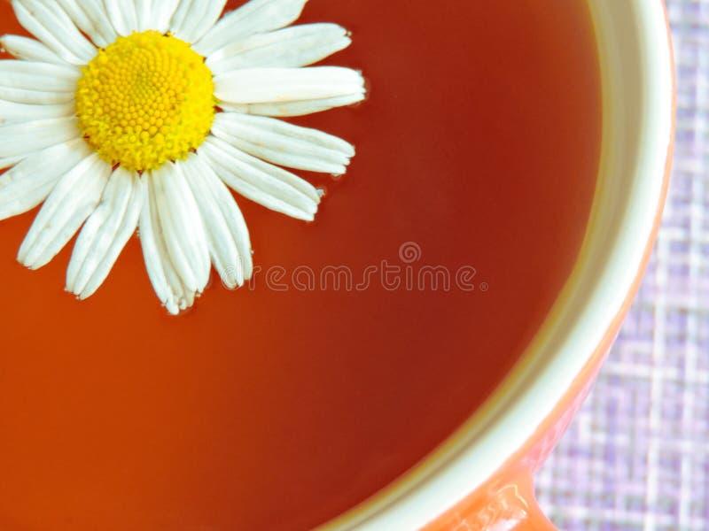 Cup Kr?utertee mit Kamillenblumen Gesunde nat?rliche Kamille Kr?uter Kr?utertee auf einem wei?en h?lzernen Hintergrund lizenzfreies stockbild