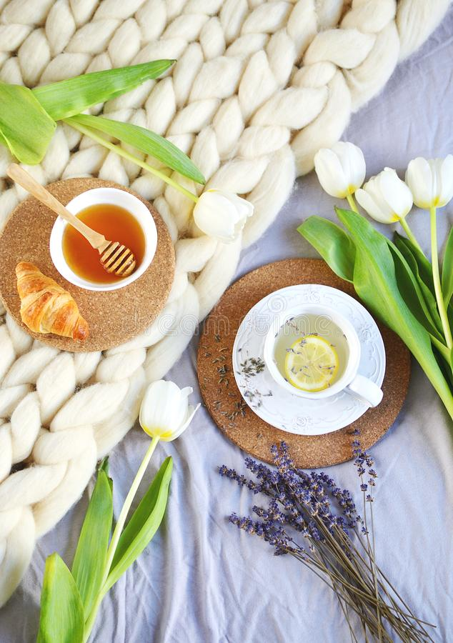 Cup with lavender tea, citrus and honey, croissant, white pastel giant knit blanket. Bedroom, flowers tulips, spring, woman day, morning concept royalty free stock image