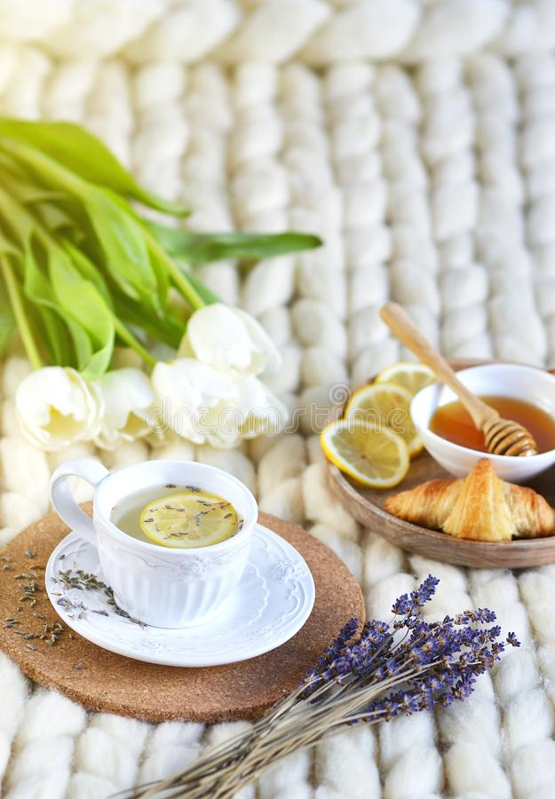 Cup with lavender tea, citrus and honey, croissant, white pastel giant knit blanket. Bedroom, flowers tulips, spring, woman day, morning concept royalty free stock photo