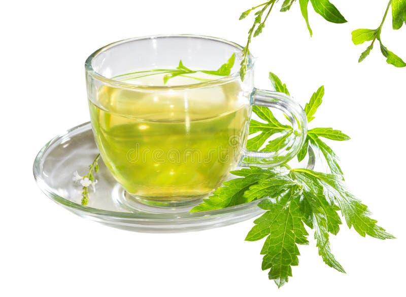 Cup of lemon verbena tea stock photo
