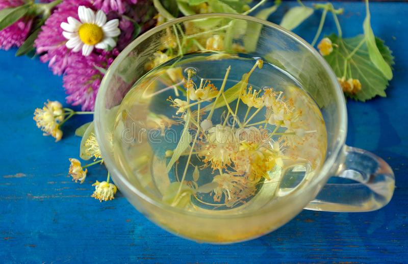 A cup of linden tea and medicinal herbs on a old blue wooden table. fresh clover, chamomile and linden. herbal tea. flu and cold r. Emedies stock images