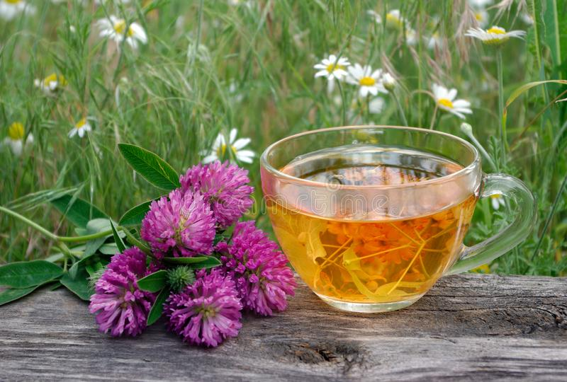Cup of linden tea on a wooden table. white butterfly sitting on a cup of herbal tea. clover flowers and a cup of flower tea. herba stock image
