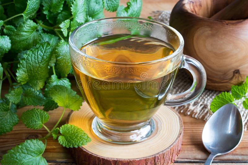 A cup of melissa tea with fresh melissa leaves. A cup of melissa lemon balm tea on a table with fresh melissa leaves in the background stock images