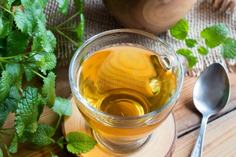 A cup of melissa tea with fresh melissa twigs. A cup of melissa lemon balm tea on a wooden table with fresh melissa twigs royalty free stock image