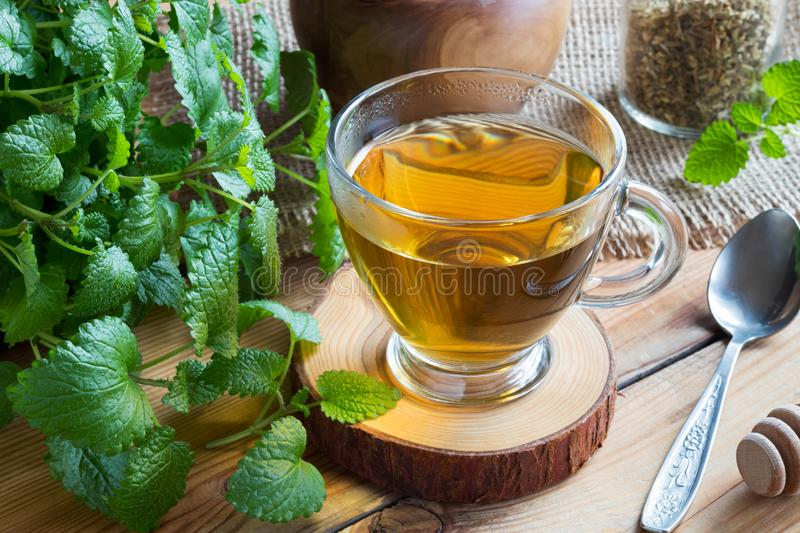 A cup of melissa tea with fresh melissa twigs. A cup of melissa lemon balm tea on a wooden table with fresh melissa twigs royalty free stock photo