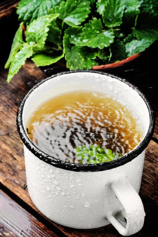 Cup of melissa tea. Fresh natural green melissa herbal tea in cup.Healthy beverage stock photo