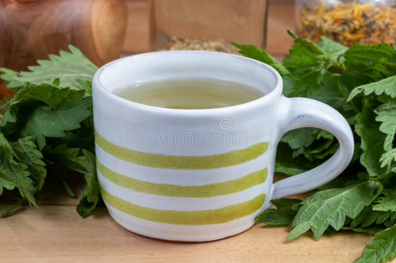 A cup of nettle tea with fresh plant. On a table stock image
